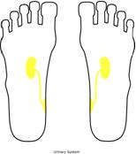 kidney feet Reflexology and the Kidneys